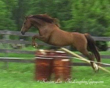Fire Storm: 7 year old Warmblood mare
